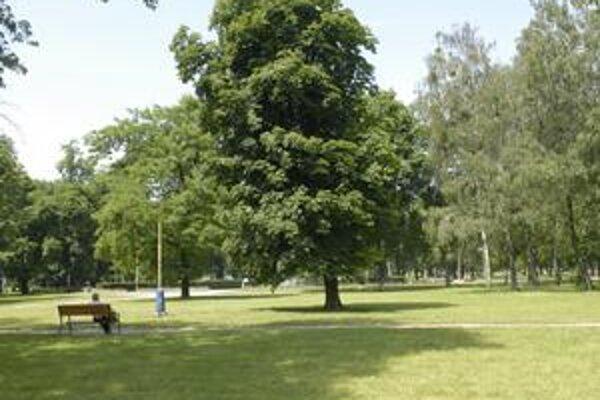 Mestský park v Košiciach. Vznikol na niekdajšej lúke v roku 1883, ktorú rozparcelovali na záhony.