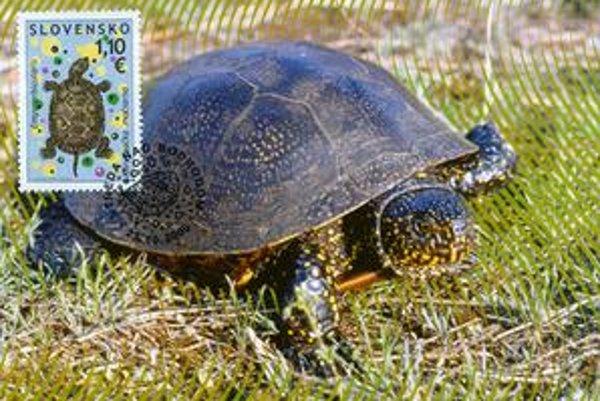 Na ohrozené zvieratá poukazujú aj poštové známky.