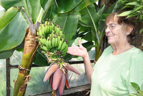 Emília Brezňanová sa teší znovej úrody.