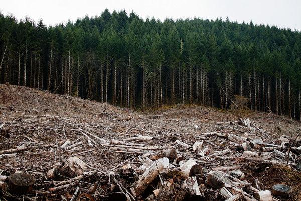 Dopad na životné prostredie vidíme aj v počte vyrúbaných lesov.