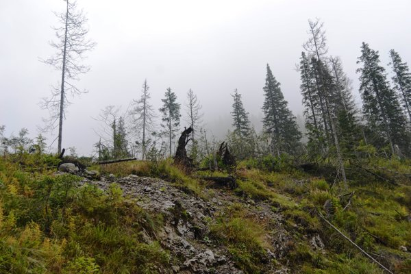 Tatranské lesy v bezzásahovej zóne. Lykožrút stromy preriedil.