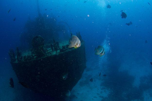 Na Maledivách možno vidieť bohatý podmorský svet.