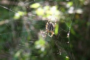 Len správne naladená sieť dá pavúkovi informácie, ktoré potrebuje.