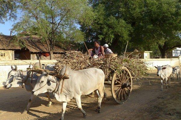 Mnohí miestni sa vzdali pôdy a teraz sa nemajú čím živiť.