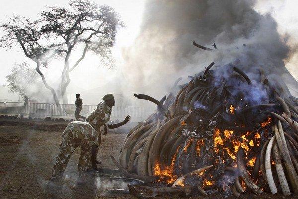 V Keni spálili pätnásť ton slonoviny. Budú v tom pokračovať.
