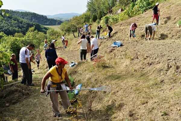 Keď práca vonia levanduľou - Dobrovoľnícky projekt OZ Dlaň