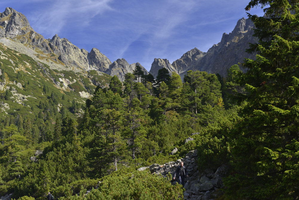 Na snímke od Popradského plesa je v pozadí Zlomisková dolina, uprostred v poraste borovice horskej (kosodrevina) rastú statné borovice limbové.