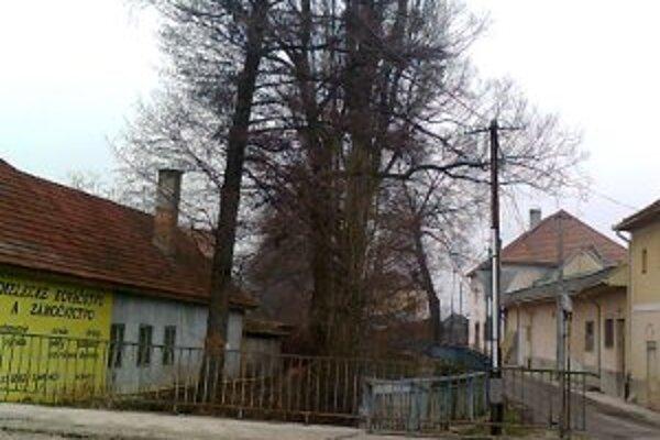 Stromy museli byť odstránené, lebo ohrozovali budovy.