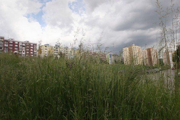 Nepokosená tráva býva  v mestách spolu s prachom hlavným  zdrojom alergénov.