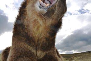 Usmejte sa na medveďa