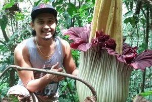 Sumatra - môj domáci' Bob