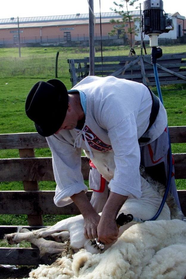 Slovenské mitrovanie, strihanie oviec.