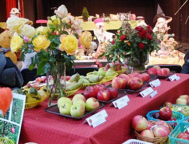 Napriek nepriaznivému počasiu s mrazmi sa v Kremnici a okolí urodili aj takéto krásne jablká.