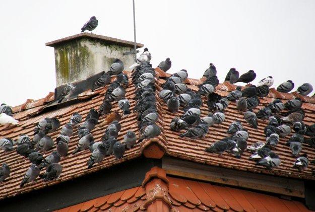 Holuby na streche budovy na pešej zóne.