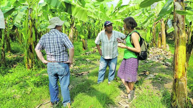 S Oswaldom a Dariom na plantáži, ktorá má okolo 11-tisíc banánovníkov