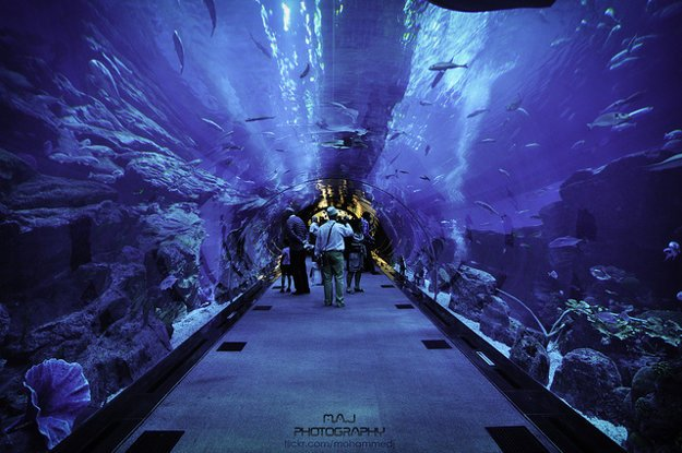 Na dne akvária vedie 48 metrov dlhý tunel 11 metrov pod hladinou.