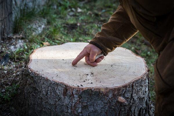 Strom bude rodine chýbať.