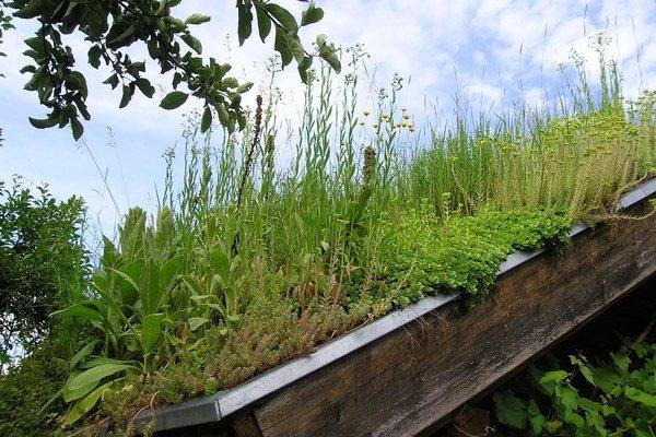 Zelená strecha môže byť nádhernou ozdobou.