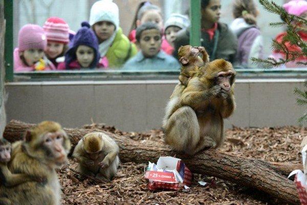 Darčeky dostanú deti aj zvieratá.