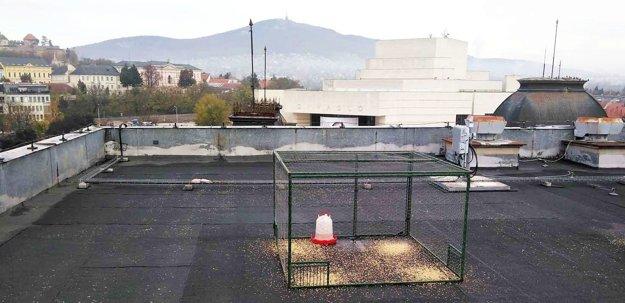 Veľká klietka s krmivom a napájadlom na streche hotela Zobor na pešej zóne.