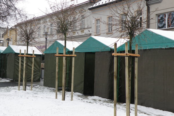 Nové dreviny sú vysádzané za vypílené stromy.
