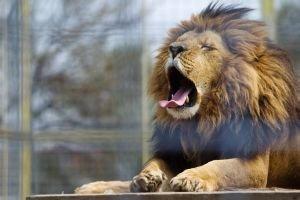 Ak máte leva skroteného, môžete sa s ním aj pomaznať. Fotografia z Hrnčiaroviec nad Parnou pri Trnave.