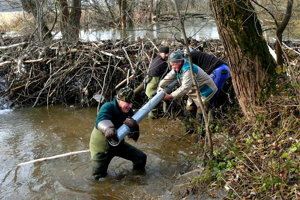 Ochranári v TANAPe riešili aj problém s bobrími hrádzami