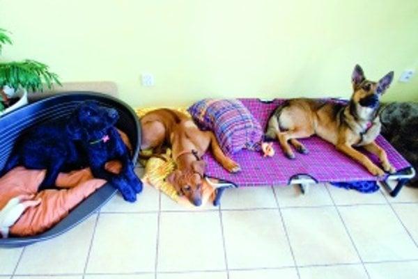 V hoteli pre psy majú štvornohí miláčikovia často väčšie pohodlie a viac pozornosti ako doma