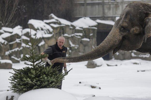 Na stromčekoch si pochutia aj slony.