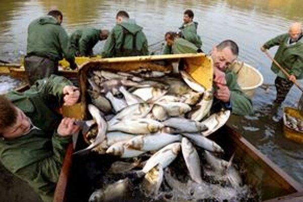 Štát nás vyzve: Jedzte ryby!