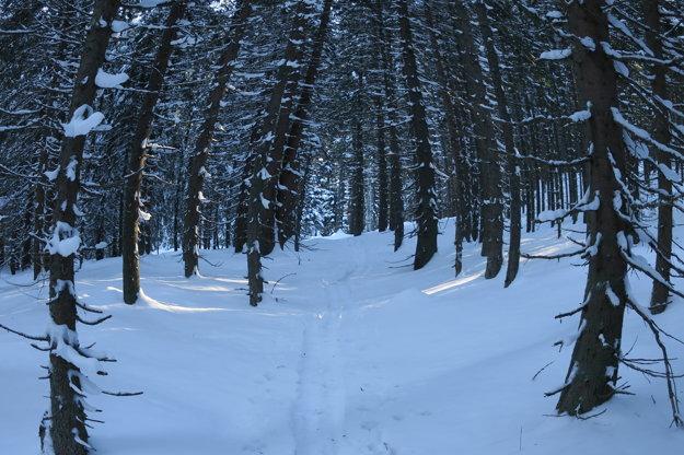 Neskôr sme  pokračovali lesom. Bez lyží s  pásmi či snežníc by  ste
