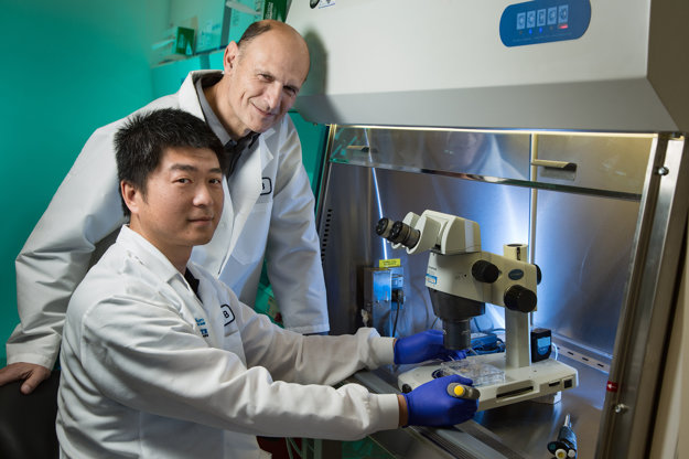 Hlavní autori výskumu Jun Wu (vpredu) a Juan Carlos Izpisua Belmonte.