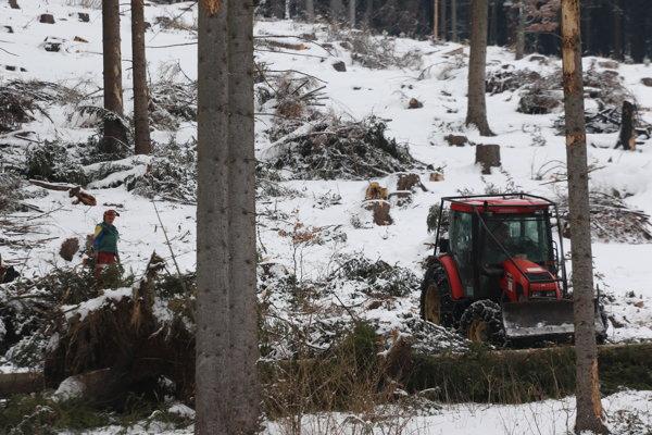 Pre silné mrazy začali Lesy SR, Odštepný závod v Čadci,  s ťažbou dreva tento rok o čosi neskôr.