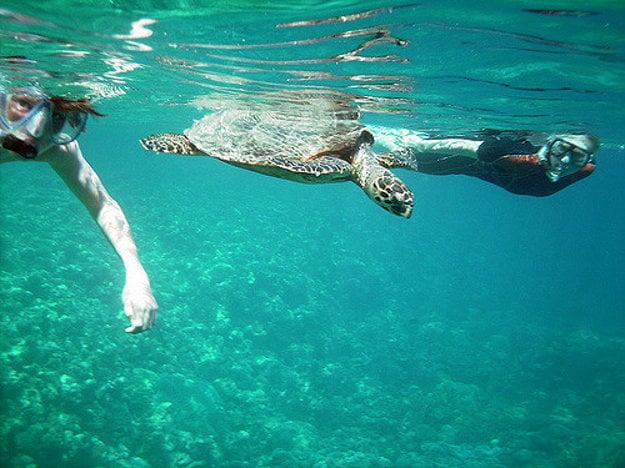 Marsa Alam je rajom pre šnorchlovanie a potápanie.