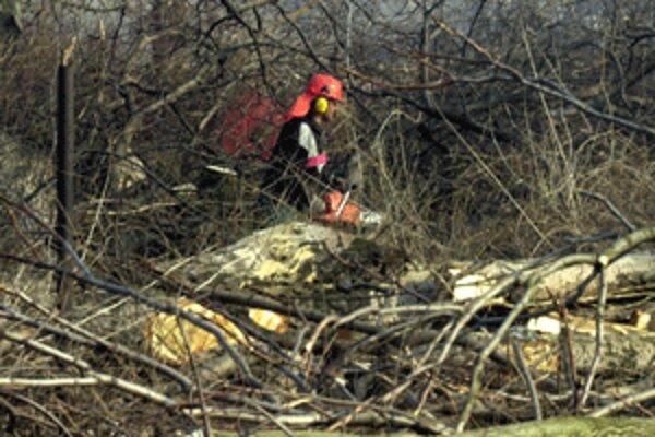 Mesto Prievidza povolilo baniam výrub stromov na Ploštinách.