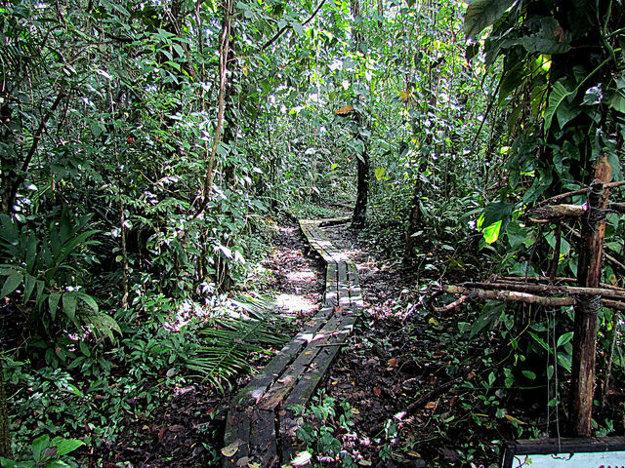 Veľkú časť územia Belizé tvoria pralesy.