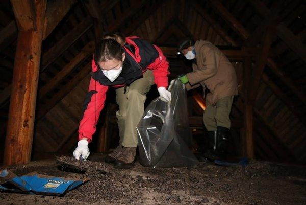Podkrovie kostola v Rajci ukrýva kolóniu netopierov. Ochranári pri pravidelnej brigáde zametajú trus.