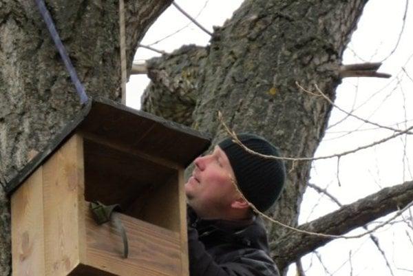 Búdky na topoľoch prilákajú dravé vtáky.