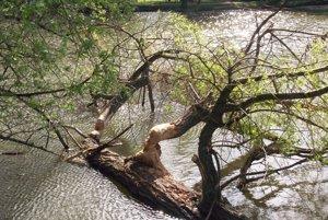 Stromy spadli do jazera Veľká Hangócka.