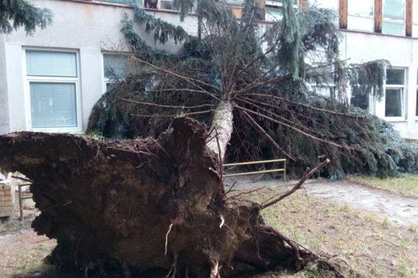 Silný vietor vyvrátil mnoho stromov.