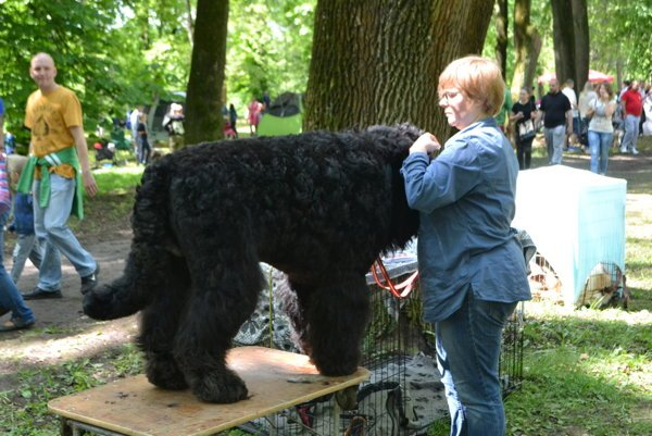 Čierny teriér pricestoval so svojou majiteľkou z Poľska.