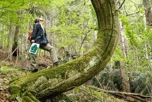 Volá sa Vlčia, leží na južnom svahu Veľkej Javoriny v pohorí Čergov a za každým jej stromom je ľudský príbeh.