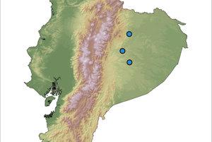 Výskyt žiab druhu hyalinobatrachium yaku v Ekvádore.