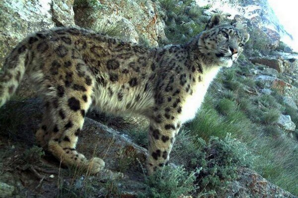 V novom národnom parku žije vzácny snežný leopard.