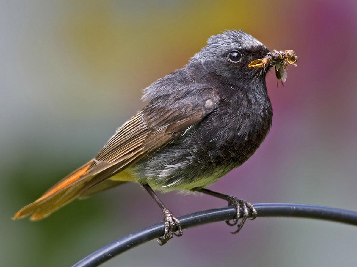 mladé mláďatá a veľké vtáky