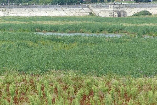 Kunovská priehrada v Senici FOTO: VLADIMÍR MIČEK