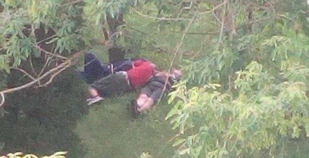 Popoludní siesta medzi stromami.