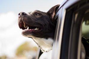 Výskumy vplyvu zvierat na zdravie ľudí sa zamerali najmä na psov.