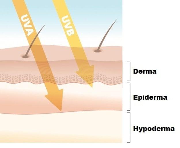 Prenikanie UV žiarenia cez pokožku.