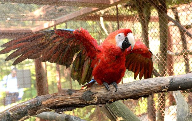 Prvý v zoo. Patrí medzi najväčšie vtáky.